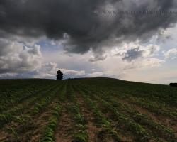 Víchor ich češe, ťažké mraky zalievajú - otužilé kukuričné lány na bielokarpatských kopcoch.
