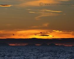 Ranné slniečko vyhuplo nad horizont Atlantiku a lúčmi prebúdza obyvateľov hlbín i pobrežia oceánu.