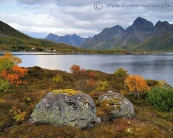 Edge of the fjord with a rich palette of autumn colors reminds maintained garden. Here at the Norwegian Lofoten is gardener nature.