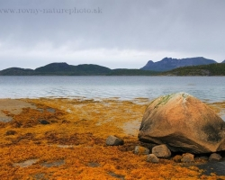 Počas odlivov sa na brehoch fjordov obnažovali bohaté chumáče rias ktoré svietili do diaľky ako zlaté kadere. Fotka zachytáva odliv na Lofotoch.
