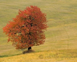 Autumn came, meadows and trees painted with warm colors