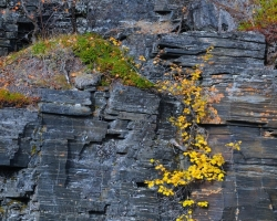 As rock garden were covered bluish slate canyon walls with colorful shrubs, mosses, lichens and grasses.