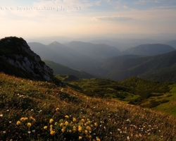 The evening of Mala Fatra hills covered with colorful fragrant flowers