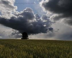 Obilný lán, osamelý strom a úžasný burkový mrak čnejúci až niekde k nebesiam.