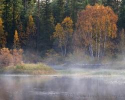 Takto nejako mi utkvela Švédska príroda v pamäti. Rieky jazerá hmly a okrem severu všade samé lesy.