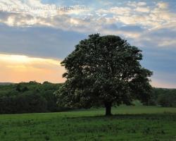 Stromy, stromy.... áno aj tento pagaštan konský patrí k tým ktoré stretávam a obdivujem. Keď kvitne, tak jeho veľké kvety sú úžasné, sú ako z vosku. S lúčnou studničkou blízko koreňov je príjemnou zastávkou v každom období. Keď sa do jeho koruny oprie posledný lúč zvlneného neba ja čas aj na fotografiu.
