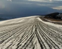 Riadky polí sa ako dlhé nite vinú po zvlnenom kopci aby zistili čo prináša modrý zimný oblak.
