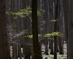 Jarné oteplenie - prvé stromy roztvárajú svoj zelený ohňostroj.