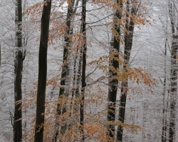 The first frost draws its ornaments in red leaves of sleeping beechs.