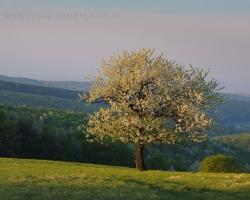 Stromy veľa pamätajú. Sú svedkami tisícov a tisícov brieždení. Ránami ich chladí trblietavá rosa. V bezoblačných nociach pozorujú premeny mesiaca a života vôkol. Stromy sú úžasné, pamätajú aj to, čo my zabúdame.