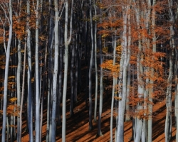 hra tieňov a farieb v jesennom bukovom lese