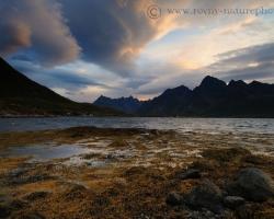 Noc sa pomaličky odkráda po špičkách za končiare kopcov vyrastajúcich zo sivomodrého fjordu. Prvé lúče sa odrážajú od uháňajúcich oblakov aby sa zastavili na zlatých riasach obnažených morským odlivom.