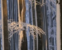 When came winter to the beech forest, frezes also sunshine in the lace of branches.