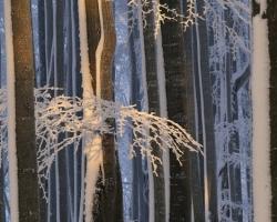 Keď v bučine zavládne zima, aj slnečný lúč zamŕza v čipkách vetiev.