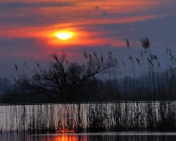The last fiery rays of the Sun smooth cold water, reeds and last Mohicans old willow.