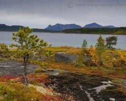 Fotografia zachytáva drobné borovice, zlaté brezy, červené čučoriedčie, zelené machy všetko ako v pekne udržovanej nórksej záhradke.