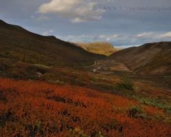 Ako strieborné stužky červeným hodvábom sa vinú potoky a rieky severskou tundrou. Zapadajúce slnko pozlacuje štíty oproti stojacich hôr.
